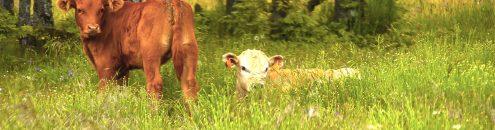 Animales en la naturaleza Villavieja del Lozoya
