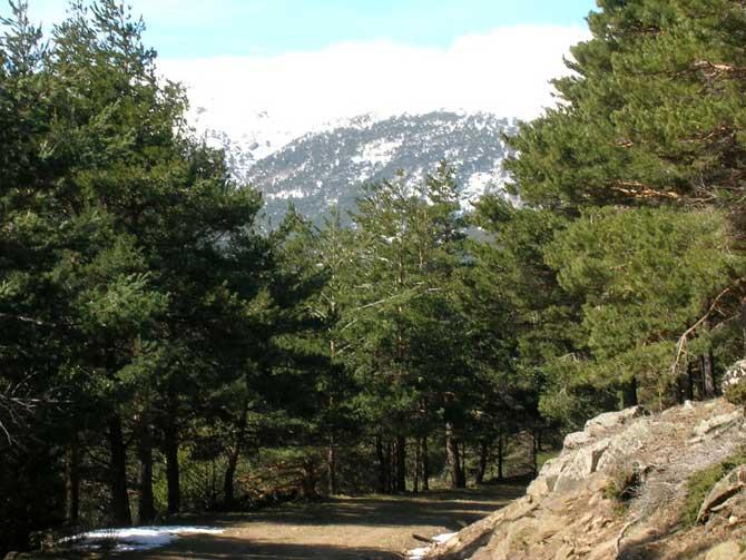 Camino del Montarrón en la ruta del Cerro del Espino